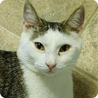 Adopt A Pet :: Dorian - Winston-Salem, NC