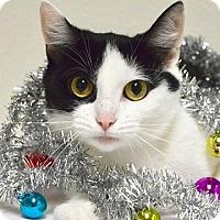 Adopt A Pet :: Talia - Dublin, CA