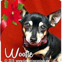 Adopt A Pet :: Woofie - Simi Valley, CA