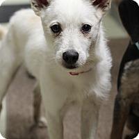 Adopt A Pet :: Jack Frost - Mount Laurel, NJ
