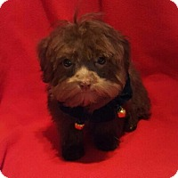 Adopt A Pet :: Hershey - Overland Park, KS
