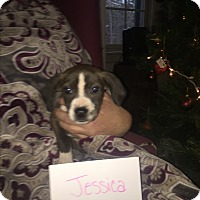 Adopt A Pet :: Jessica - Colonial Heights, VA