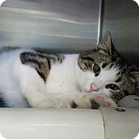 Adopt A Pet :: Hickory - Elyria, OH