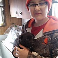 Adopt A Pet :: Katie - Walthill, NE