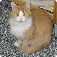 Adopt A Pet :: Alley Cat - Harrisburg, NC