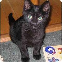 Adopt A Pet :: Jingles - Kirkwood, DE