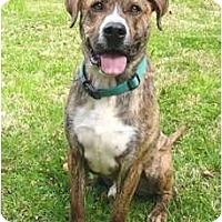 Adopt A Pet :: Clancy - Mocksville, NC