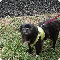 Adopt A Pet :: Linus - Chantilly, VA