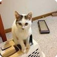 Adopt A Pet :: Peanut - Pittstown, NJ
