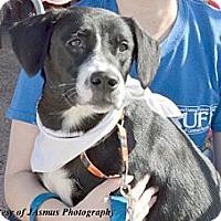 Adopt A Pet :: Franny - Minneola, FL
