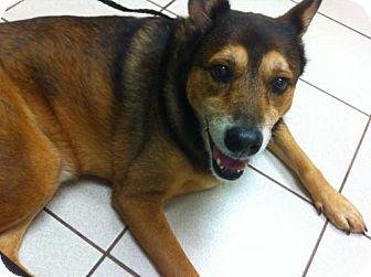 Shepherd (Unknown Type) Dog for adoption in Jacksonville, Florida - Blossom - Sponsor
