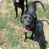 Adopt A Pet :: Niva - Buffalo, WY