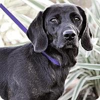 Adopt A Pet :: Reese - Gainesville, FL