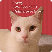 Adopt A Pet :: Fabulous FROSTY - Monrovia, CA