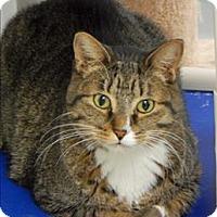 Adopt A Pet :: Money - Topeka, KS