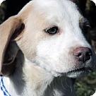Adopt A Pet :: Sheena