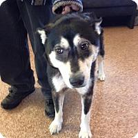 Adopt A Pet :: Bri - Zanesville, OH