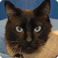 Adopt A Pet :: Mitch - Cincinnati, OH
