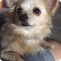 Adopt A Pet :: Coco - Brunswick, ME