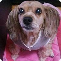 Adopt A Pet :: Caro - Lisle, IL