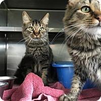 Adopt A Pet :: Hailey - Monroe, MI