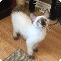 Adopt A Pet :: Quincy - Salt Lake City, UT