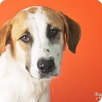 Adopt A Pet :: TRUDY - Roanoke, VA