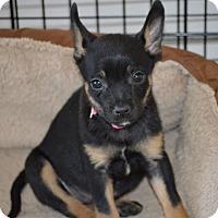 Adopt A Pet :: Ada - Aubrey, TX