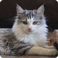 Adopt A Pet :: Oswald - St. Louis, MO