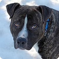 Adopt A Pet :: Reggie - Port Washington, NY