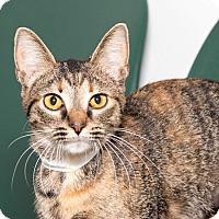 Adopt A Pet :: Remi - Martinsville, IN