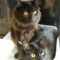 Adopt A Pet :: Olga & Nadia - Burbank, CA