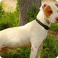 Adopt A Pet :: CENA - Pegram, TN