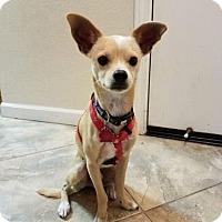 Adopt A Pet :: Jasper 2 - Pittsburg, CA