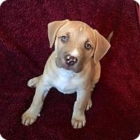 Adopt A Pet :: Maverick - Woodstock, GA