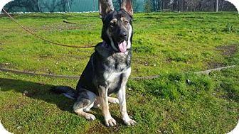 German Shepherd Dog Mix Dog for adoption in Willows, California - ROCKET