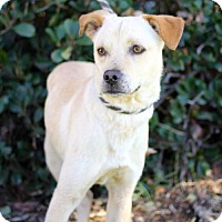 Adopt A Pet :: Milagros - San Diego, CA