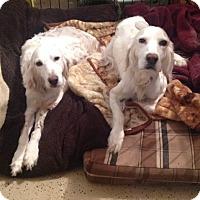 Adopt A Pet :: MAISEY & MAX - Pine Grove, PA