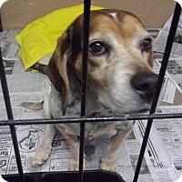 Adopt A Pet :: Donnie - Jamestown, TN