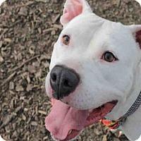 Adopt A Pet :: TONY - Decatur, IL
