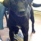 Adopt A Pet :: Charming Charlie, Family Boy!