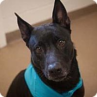 Adopt A Pet :: Fern - Novelty, OH