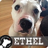 Adopt A Pet :: Ethel - Chicago, IL