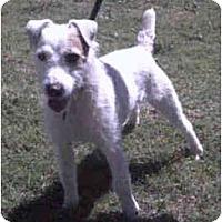 Adopt A Pet :: DUSTY - Phoenix, AZ