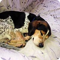 Adopt A Pet :: Reuben - Novi, MI