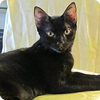 Adopt A Pet :: Sinatra - Seminole, FL