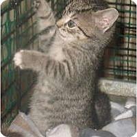Adopt A Pet :: Daiblo - Acme, PA