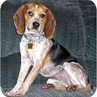 Adopt A Pet :: Besame - Novi, MI