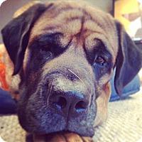 Adopt A Pet :: Tonka - Milford, MI