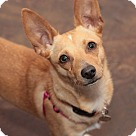 Adopt A Pet :: Matilda